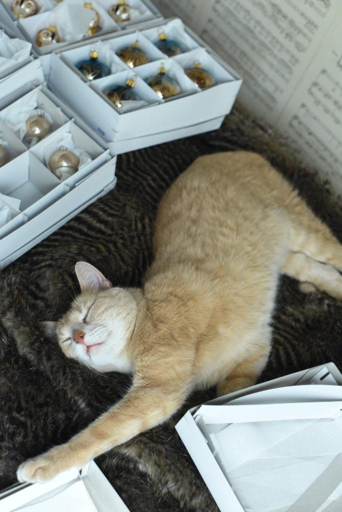 Kočka u skleněné ozdoby. Vánoční kolekce zázraky přírody.